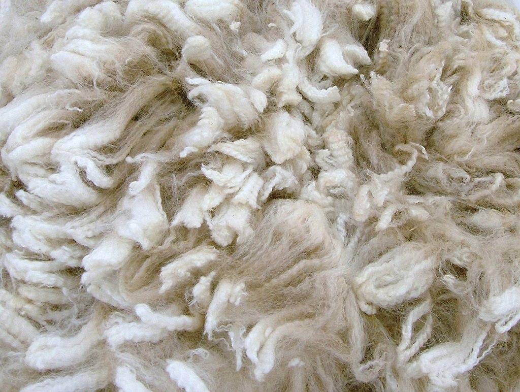 Alpaca fleece