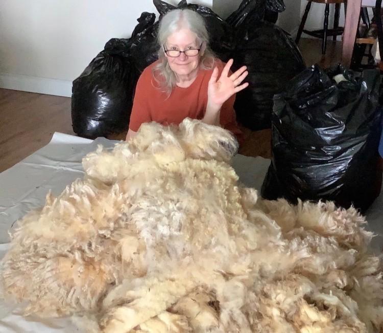 My wife Nicole with sheep fleeces